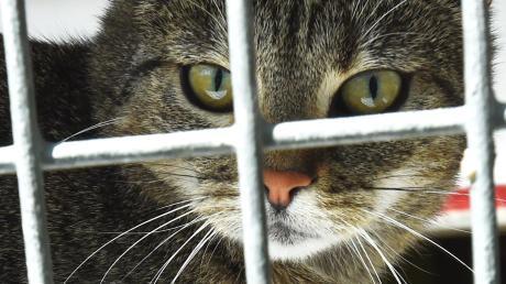 Eine Katze ist in Reichling von Unbekannten mit Farbe besprüht worden.