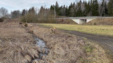 Bei Holzhausen wird ein großes Rückhaltebecken gebaut. Vorbereitende Arbeiten haben bereits begonnen.