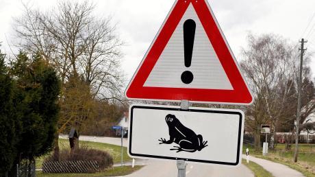 Wegen der Krötenwanderung werden im Landkreis Landsberg Straßen gesperrt.