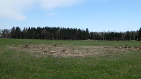 Auf einer staatseigenen Wiese bei Westerschondorf wurde ein etwa bauplatzgroßes Weidengehölz beseitigt.