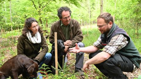 Julia und Johannes Bachmeir inspizieren mit Förster Friedrich Wendorff (rechts) die im Frühjahr gepflanzten Bäume in einem Wald bei Penzing.