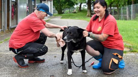 """Hund """"Socke"""" wird von den Tierpflegerinnen Gabi Müller (links) und Sylvia Eser gebadet und abgetrocknet."""