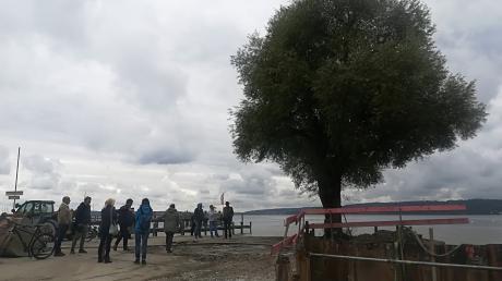 Diese Weide in den Dießener Seeanlagen wird wohl gefällt, damit auch in diesem Bereich die Uferbefestigung erneuern werden kann. Das wurde bei einer Besprechung zwischen Baufirma, Planern und Gemeinde deutlich.