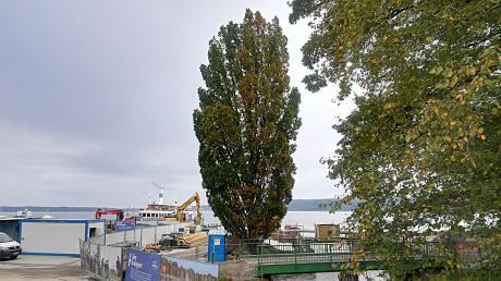 In Dießengibt es Überlegungen, auch die Ufermauer am Mühlbach zu erneuern. Das könnte dann auch ein Problem für die dortige Eiche bringen.