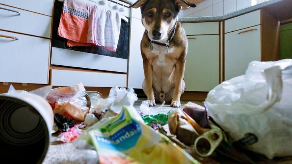Tiere Wirbelsturm In Der Wohnung Hunde Früh Ans Alleinsein