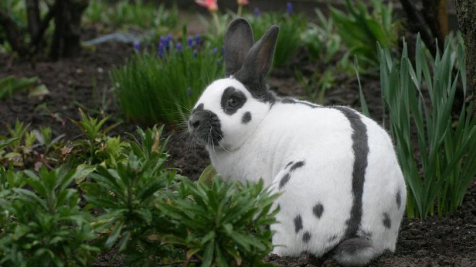 Tiere Plagegeister Im Garten Kaninchen Haben Angst Vor Hunden
