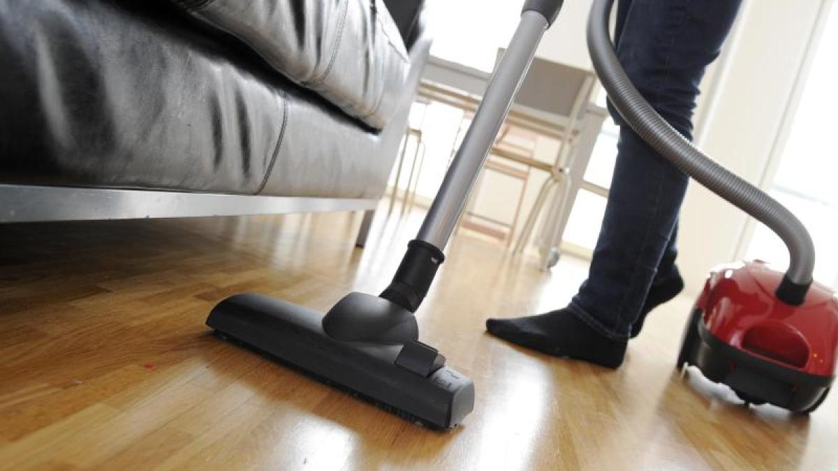 tiere hund hat fl he halter muss mehrmals t glich staubsaugen leben freizeit. Black Bedroom Furniture Sets. Home Design Ideas