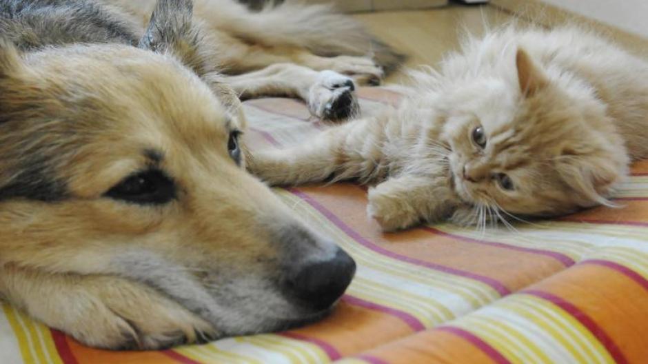 Haustiere So Viel Kosten Hund Und Katze Im Vergleich Geld Leben