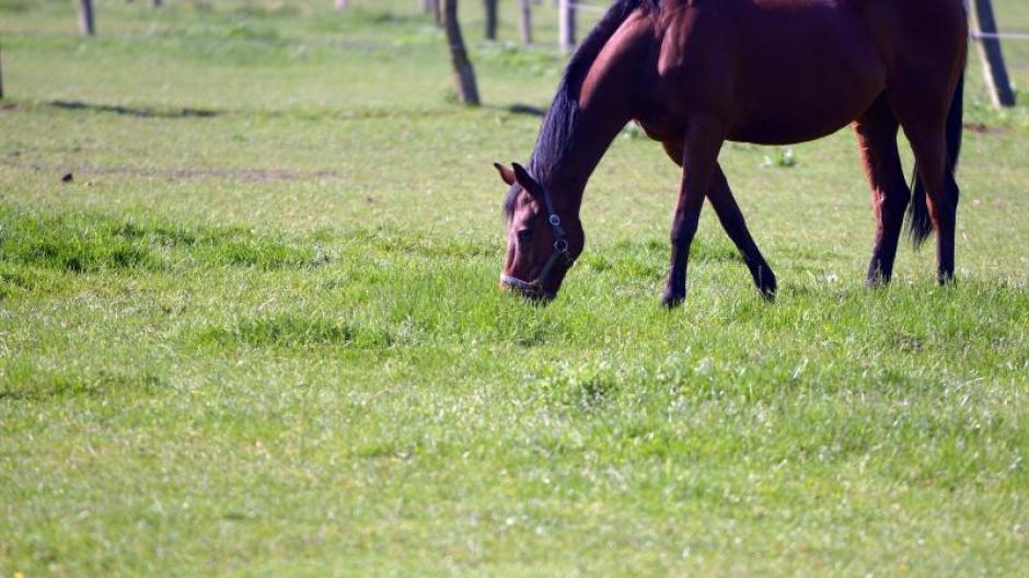 Tiere Pferde Im Frühjahr Langsam An Frisches Gras Gewöhnen Leben