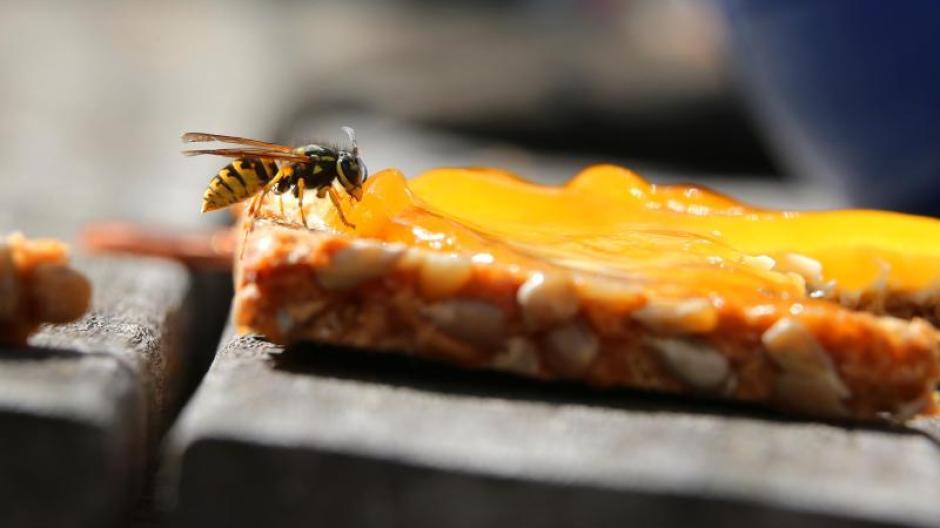 Wespen Wieder Aggressiver Spatsommer Warum Sie Wespen Auf Keinen