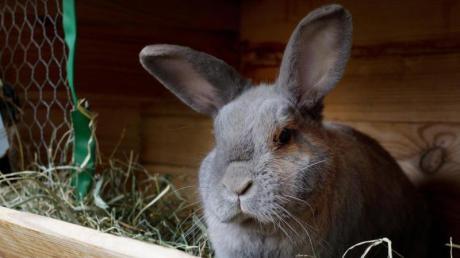 Ein Kaninchen ist nachts in Ludwigsfeld gestohlen worden.