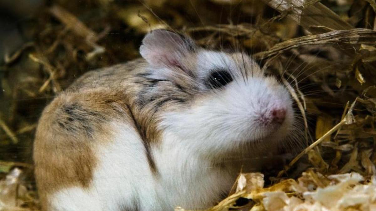 Ver Nderungsmuffel Hamster Ihr Gehege Nicht Komplett