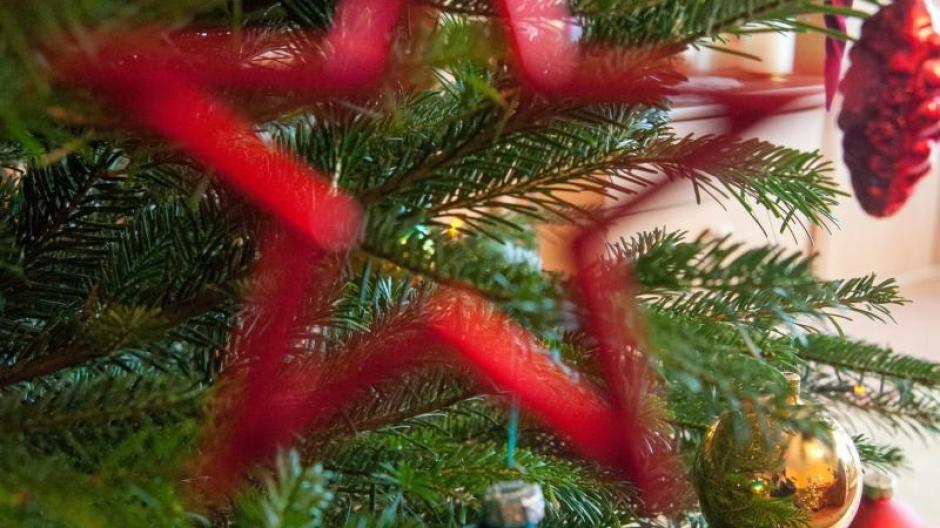 Weihnachtsbaum Tradition.Weihnachten Woher Kommt Eigentlich Der Weihnachtsbaum Geld