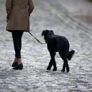 Hundehalter müssen in Mering künftig tiefer in die Tasche langen.