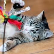 Auch Katzen können sich mit dem Coronavirus anstecken. Meistens ist das nicht weiter schlimm. Es gibt aber auch andere Fälle.