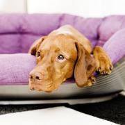 Alle Infos zur neuen Abnehm-Show für Hunde und Besitzer bekommen Sie hier: Start, Sendetermine und Sendezeit.