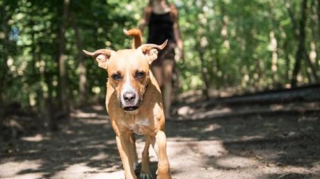 Hundebesitzer müssen in Steindorf bald mehr Hundesteuer bezahlen.