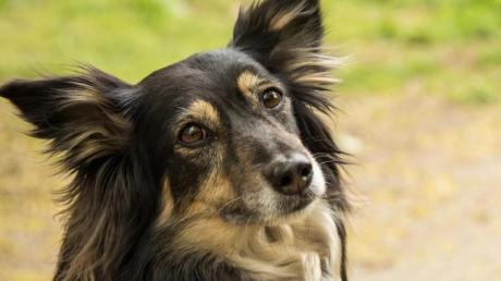 In Stadtbergen im Stadtteil Leitershofen könnten aktuell Giftköder ausliegen. Die Polizei bittet Hundehalter um besondere Vorsicht.