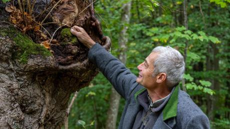 Bei dem rund einstündigen Spaziergang mit Jürgen Kircher, Leiter der Forstverwaltung, ging es auch darum, was der Wald den Bürgern für gute Behandlung zurückgibt.