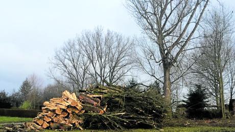 In Bächingen wurden mehrere Pappeln gefällt. Eine Anwohnerin ist darüber empört.
