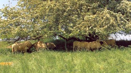 Hier wurden einige Tiere am 14. Mai wieder gefunden.