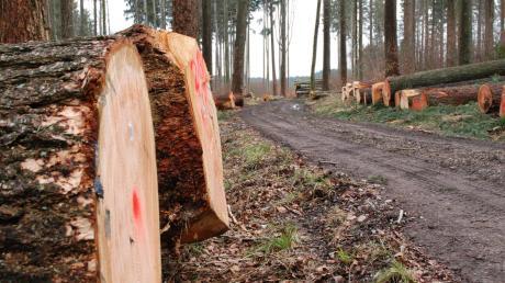 Wegen des Orkantiefs Sabine, das im Februar 2020 über Deutschland wütete, wurde in den Wäldern bei Buch und seinen Ortsteilen mehr Holz geschlagen als geplant.