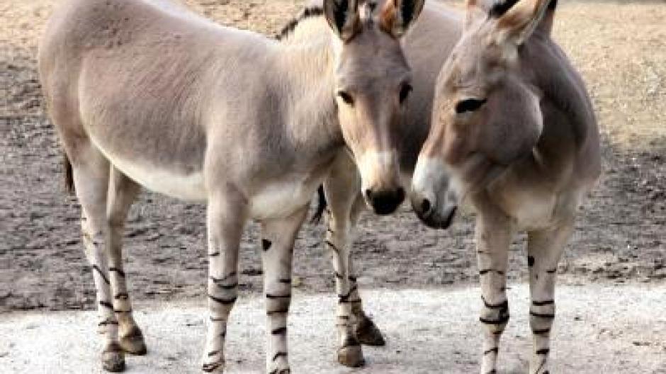Sex Im Tierreich Partnervermittlung Für Zootiere Promis Kurioses