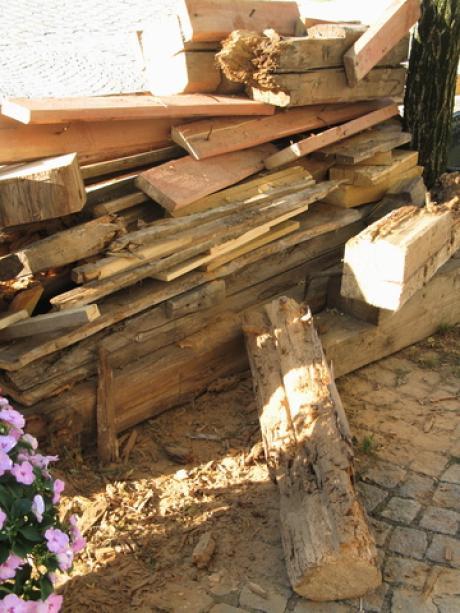 Vorsicht Holzbock Bauen Wohnen Themenwelten Ratgeber