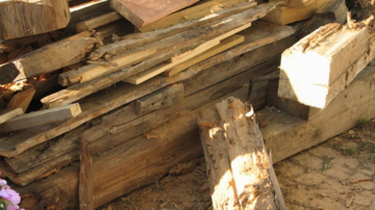 vorsicht: holzbock - bauen & wohnen | themenwelten ratgeber