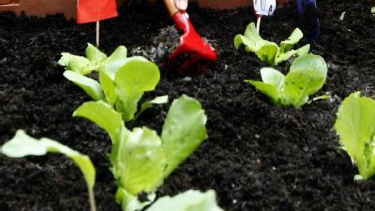 gemüse selbst anbauen: fruchtfolge beachten - bauen & wohnen