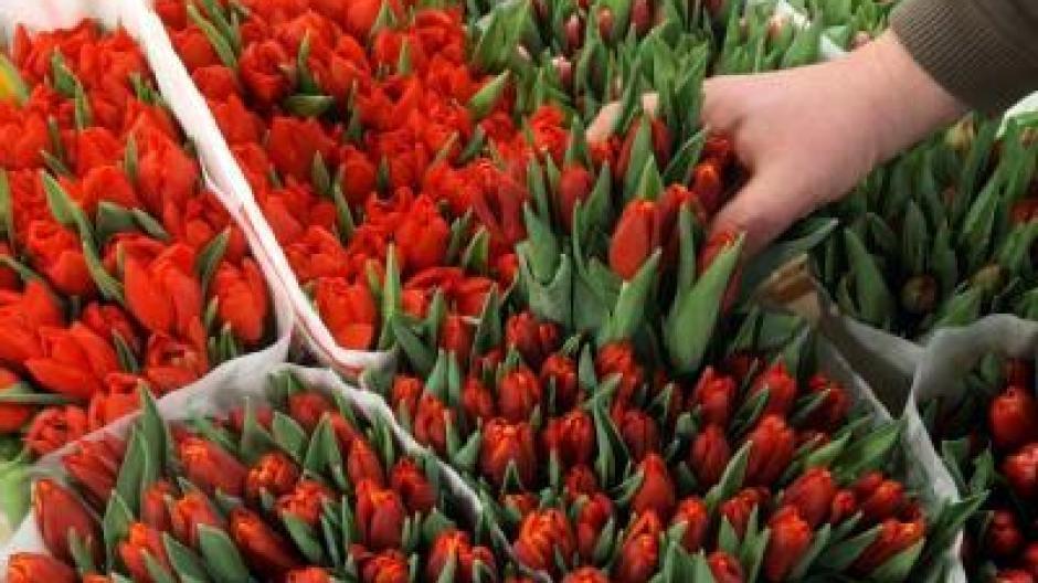 Schnittblumen Halten In Geeigneter Vase Länger Bauen Wohnen