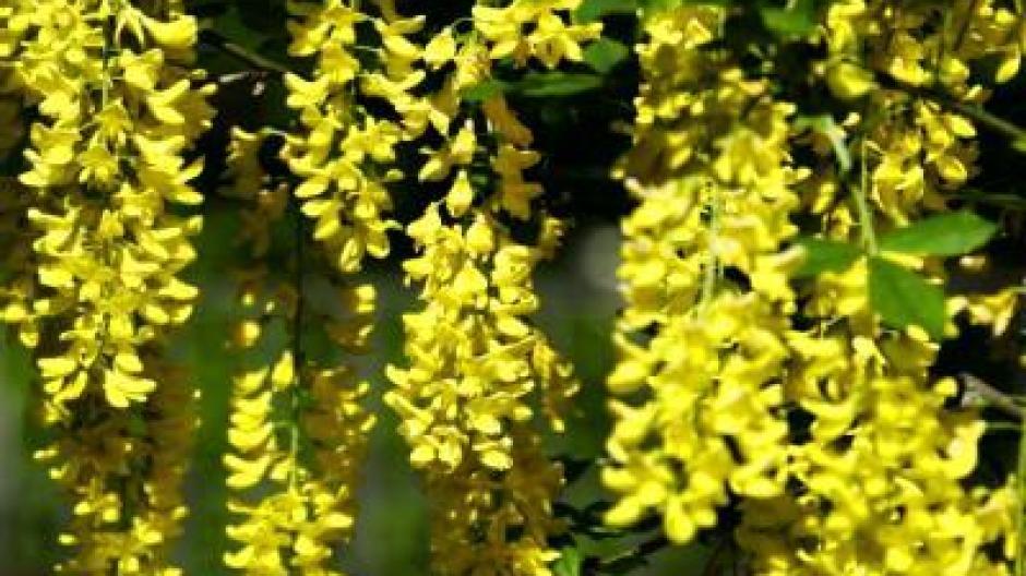 Gefahr Für Kinder Giftige Blumen Im Garten Bauen Wohnen