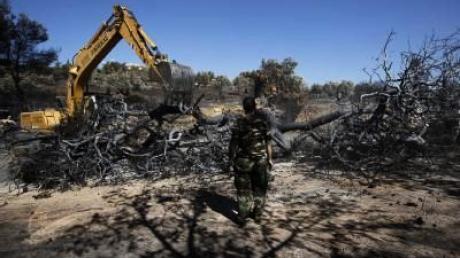 Waldbrände in Südeuropa unter Kontrolle