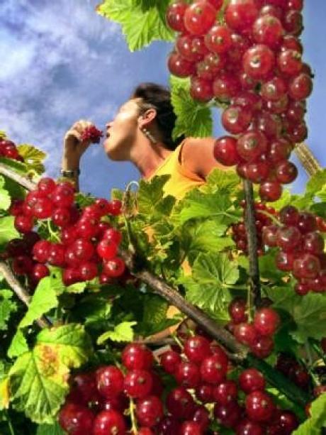 Frisches Obst Vom Balkon Bauen Wohnen Themenwelten Ratgeber