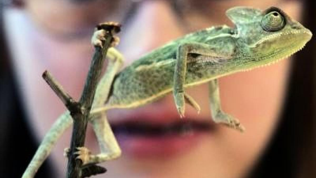 Reptilien Haustiere