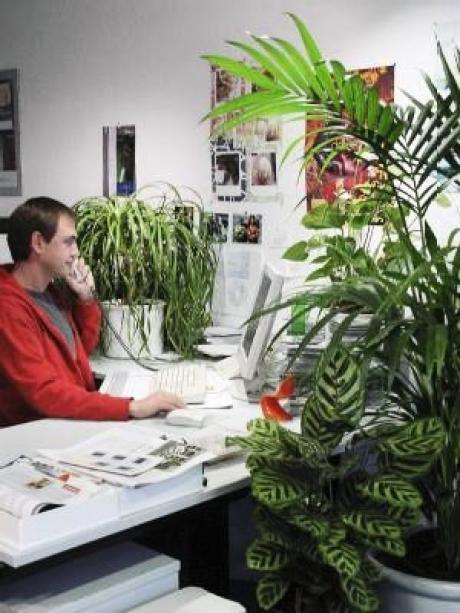 Wege Aus Der Burowuste Pflanzen Fur Gutes Raumklima Bauen
