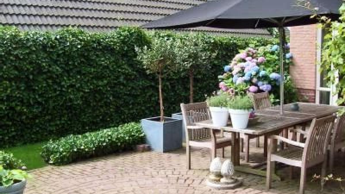 Hecke Zaun Oder Mauer Windschutz Fur Den Garten Augsburger