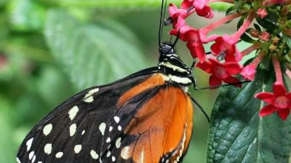 Mit Den Richtigen Blumen Schmetterlinge Anlocken Leben Freizeit