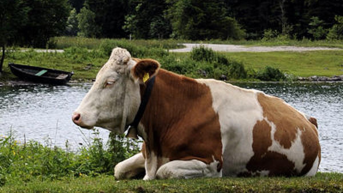 Bekanntschaften landwirtschaft - Inhalte - Veterinärwesen