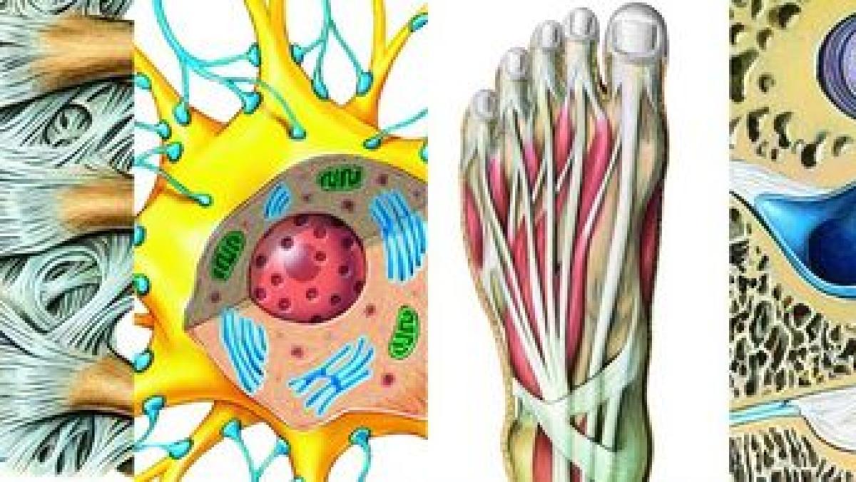 Systeme des menschlichen Körpers - Gesundheit | Themenwelten ...