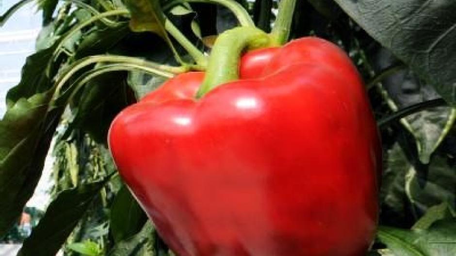 Kühlschrank Im Auto Lagern : Paprika nicht im kühlschrank lagern gesundheit themenwelten