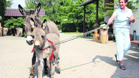"""Wegen der ansteckenden Blutarmut mussten in Friedberg das Eselfohlen """"Friedolin"""" und seine Mutter """"Philomena"""" eingeschläfert werden. Foto: Schmidt"""