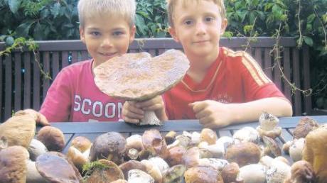 Sage und schreibe 25 Zentimeter groß ist der Steinpilz, den Korbinian Schneider (li.) und Luca Wohlhaupter in der Nähe von Eppishausen gefunden haben.