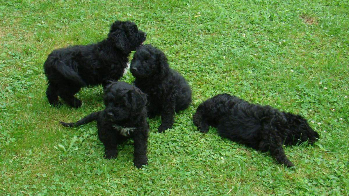 Tierisch: Verwandt mit Obamas Hund - Nachrichten Mindelheim