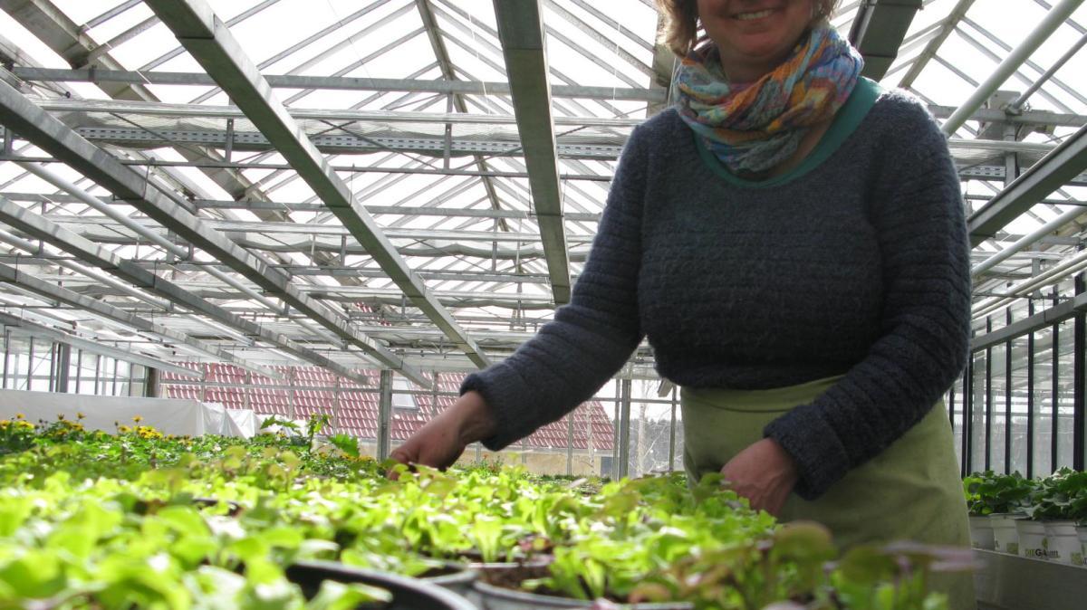 Frühling: Lasst Blumen sprießen - Nachrichten Mindelheim ...