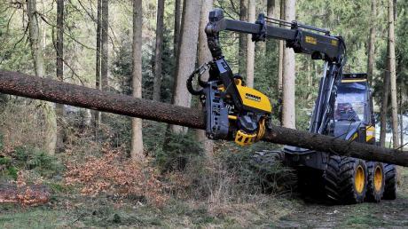 Mit großen Erntemaschinen, sogenannten Harvestern, rücken Waldbesitzer den umgestürzten Bäumen zu Leibe. Das Holz muss rasch aufgearbeitet werden, weil sonst ein Käferbefall droht.