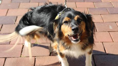 Ausgelegte Giftköder haben im Unterallgäu Hundehalter verunsichert.