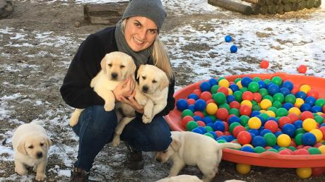 Teresa Seitle, Tochter von Wolfgang Seitle von der Blindenhundschule in Neuburg, beim Spielen mit den neuen Labradorwelpen. Für die Hunde werden Paten gesucht. Auf dem Bild sind die Welpen ungefähr sechs Wochen alt.