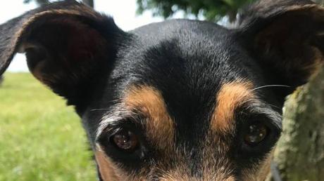 Sechs Tage war Dicki, der Hund von Familie Pschierer, verschwunden.