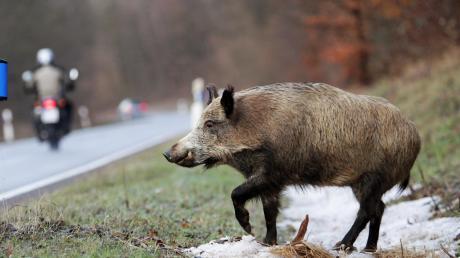 Zwei Fahrzeuge sind am Donnerstagmorgen bei Unterroth mit einem Wildschwein kollidiert.